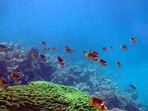 подводный мир, Макади Бей, Красное море, Египет,