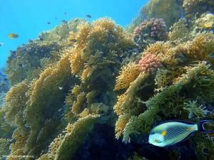 Макади Бей, огненные кораллы, рыбы, отель, Club Azur 4, Красное море, Египет, Клуб, отзыв