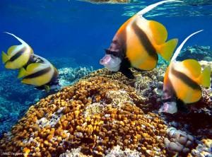 кораллы, рыбы, отзыв, отель, Club Azur 4, Макади Бей, Красное море, Египет, Клуб, Resort