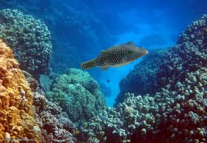 кораллы, рыбы, отель, Club Azur 4, Макади Бей, Красное море, Египет, Клуб, отзыв, Resort
