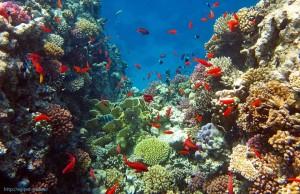 коралловый, риф, рыбы, отель, Club Azur 4, Макади Бей, Красное море, Египет, Клуб, отзыв