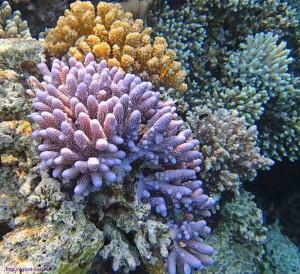 коралловый, риф, курорт, Port Ghalib, Красное море, Египет, элитный