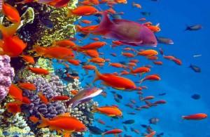 Hurgada, Красное море, курорт, подводный мир, Египет