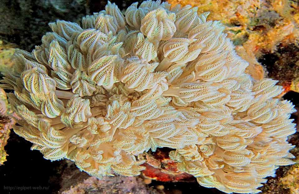 русские кораллы