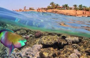 Красное море, Bahr el Ahmar, Арабская Республика Египет, Egypt, кораллы, рыба попугай