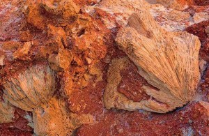 скалы, Красное море, Red Sea, побережье, Египет, АРЕ, Миср