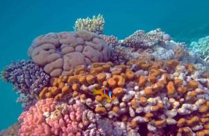 кораллы Красного моря, Египет, Red Sea, подводная жизнь, Миср