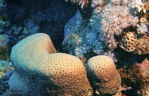 кораллы Красного моря, Red Sea, подводная жизнь, Египет, Миср