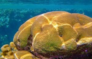 Красное море, коралловый риф, подводный мир, Egypt, АРЕ