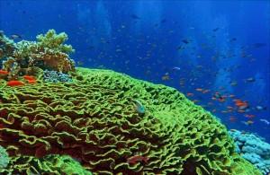 кораллы Красного моря, Египет, подводная жизнь, Red Sea, Миср