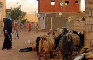 Dahab, быт, городская улица, арабская женщина, овцы, Sinai, АРЕ, Маср, Egypt