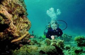подводный мир, погружение, экстремальный отдых, Красное море, Egypt, туризм