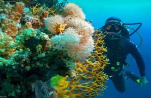 дайвинг, Шарм, путешествия под водой, Red Sea, Египет, экскурсии