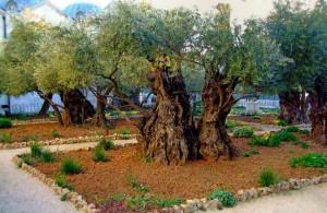 Гефсимания, Иерусалим, христианство, Izrail, путешествия, достопримечательности, туризм