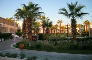 Dreams Beach Resort 5, отзыв об отеле, сервис, описание, территория, пальмы