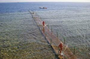 Dreams Beach Resort 5, Красное море, пляжный отдых, описание, отзыв об отеле, сервис, пирс