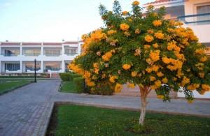 территория, отзыв об отеле, описание, Dreams Beach Resort 5, сервис, газоны