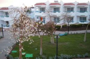 отдых в Египте, Дримс Бич Ресорт 5, номер, отзыв, отель, 5 звезд, оазис, лилиевые деревья