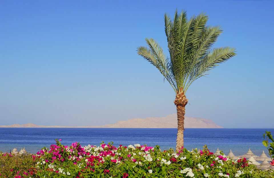 гид, Melia Sinai, отдых в Египте, экскурсии, аэропорт, сервис, откат, заполнение миграционной карточки, Красное море