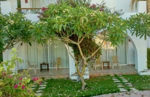 отель Melia Sinai 5*, компактная территория с изобилием зелени и цветов, Шарм Эль Шейх, отдых в Египте, Egypt