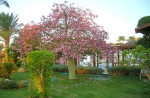 озеленение территории с душой, отель Мелиа Синай, отзыв об отдыхе, курорт Шарм, Египет, впечатления
