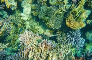 кораллы, отель Melia Sinai 5, отдых в феврале, Шарм Эль Шейх, Egypt