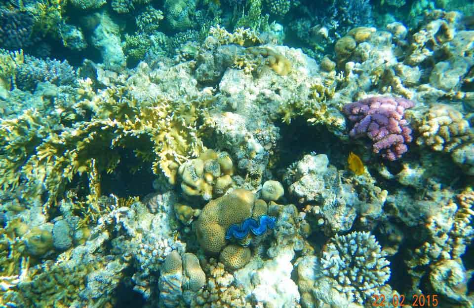 коралловый риф, отель Melia Sinai 5, Шарм Эль Шейх, отдых в феврале, Egypt