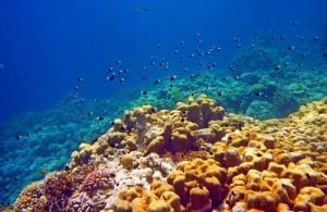 Красное море, отель Мелиа Синай, отзыв об отдыхе, курорт Шарм, бухта Рас Назрани, Египет, личные впечатления