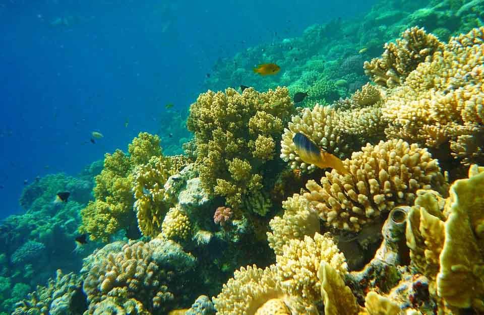 отель Мелиа Синай, Красное море, бухта Рас Назрани, отзыв об отдыхе, курорт Шарм, Египет, впечатления
