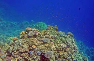 коралловый риф отеля Melia Sinai 5*, Шарм Эль Шейх, отдых в Египте, Egypt, Red Sea