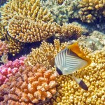 Коралловый риф отеля Мелиа Синай. Подводный мир Красного моря