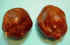 Плоды пальмы дум, ярковыраженное антимикробное действие, очищает желудок от бактерий, стабилизирует давление, чаи Египта