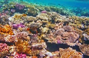 отель Melia Sinai 5*, Красное море, бухта Рас Назрани, отзыв об отдыхе, курорт Шарм, Египет, впечатления