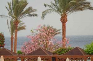 отель Мелиа Синай, пляж, море, отзыв об отдыхе, курорт Шарм, Египет, впечатления