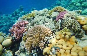 мыс между отелями Мелиа Синай и Мелиа Шарм, коралловый риф, отзыв об отдыхе, курорт Шарм, Египет