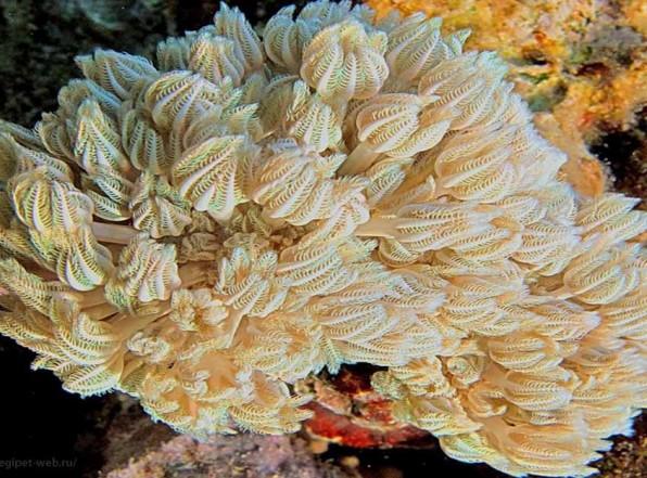 Кораллы Красного моря – волшебная подводная страна