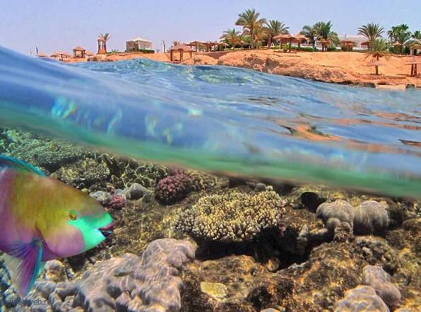 Красное море — загадочный мир