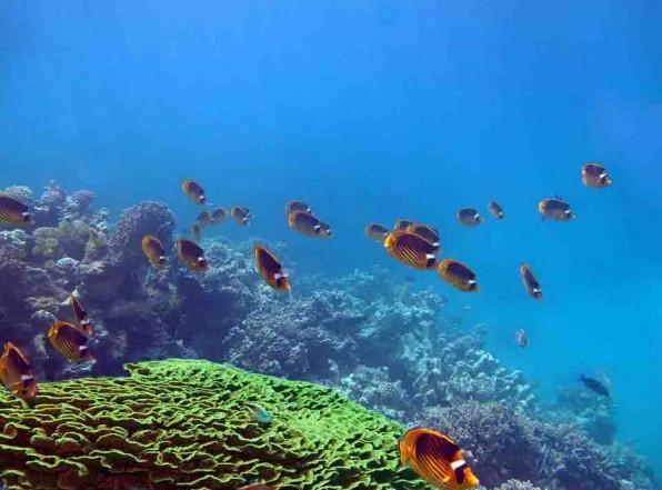 Макади Бей. Курорт мечты на Красном море