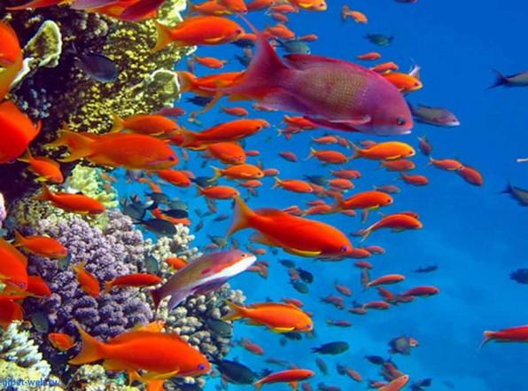 Какая температура воды в Красном море?