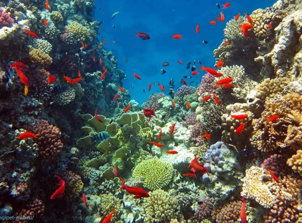 Египет открыл новый курорт на Красном море. Порт-Галиб